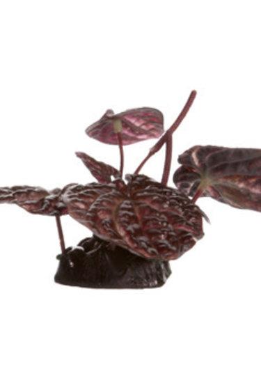 Fluval Lotus sacré rouge Fluval, petit, 10 cm (4 po), avec base