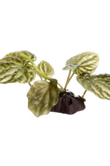 Fluval Lotus sacré Fluval, petit, 10 cm (4 po), avec base