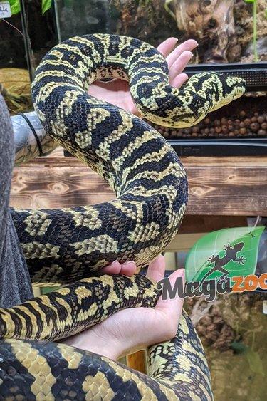 Magazoo Python tapis jungle diamond femelle