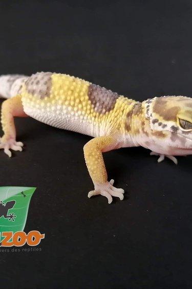 Magazoo Gecko Léopard albino Tangerine