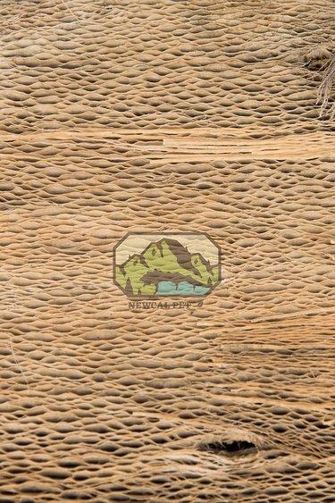 NewCal Pets Écorce de cactus - Cactus Bark