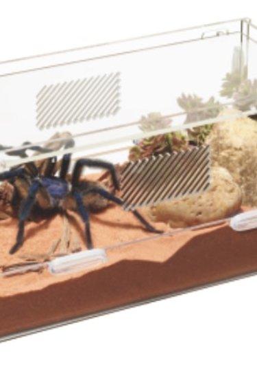 Zilla Micro habitats terrestres - Micro Habitats Terrestrial