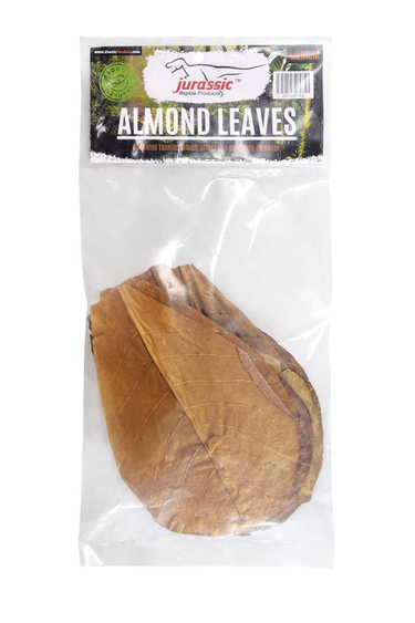 Jurassic Reptile Feuilles d'amandes moyenne - Almond Leaves - Medium