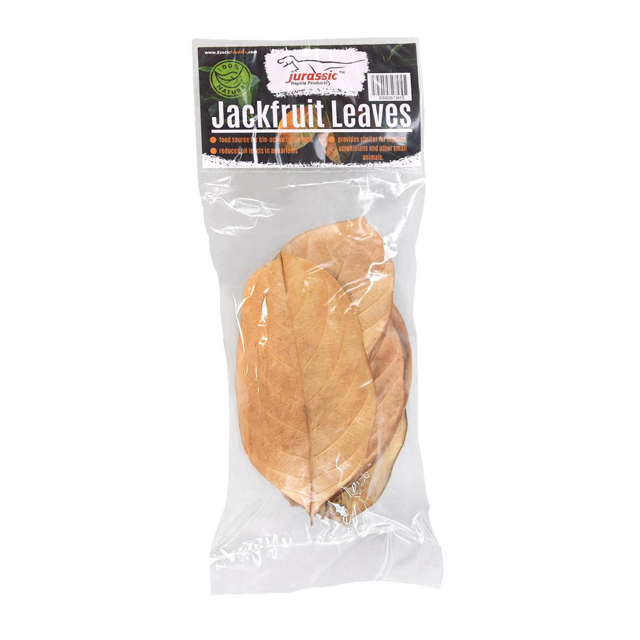 Jurassic Reptile Feuilles de jacquier - Jackfruit Leaves