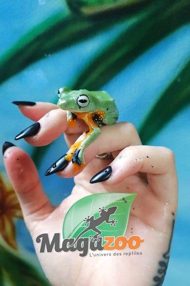 Magazoo Rainette volante verte/green flying frog