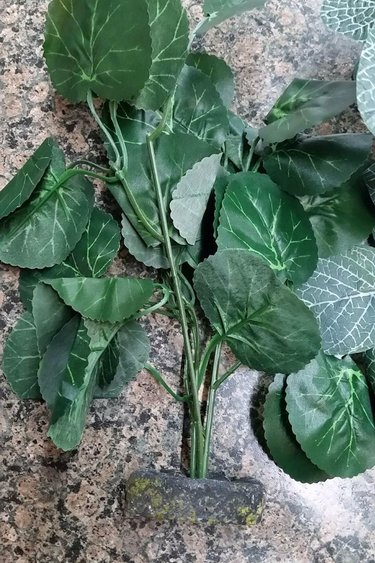 Plante de soie sur base petite