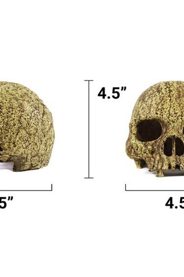 Pangea Grotte en crâne humain - Human Skull Cave