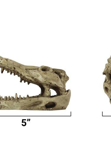 Pangea Beau crâne de crocodile - Crocodile Skull