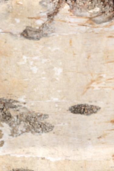 NewCal Pets Feuille d'écorde de bouleau - Birch Bark Sheet