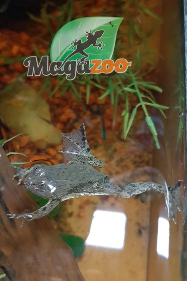 Magazoo Grenouille verte flottante/Green puddle frog