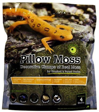 Galapagos Oreiller de mousse - Terrarium moss
