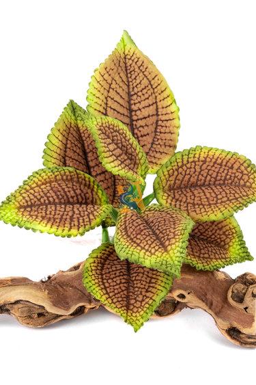 Pet-Tekk Feuille de Coleus sur bois - Coleus tropical Plant on Driftwood