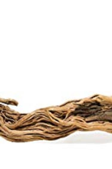 Galapagos Branche dragon 31'' - 59'' de long - Dragon Branch