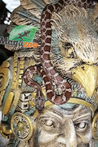 Magazoo Serpent des blés Cinder (Bébé Mâle 1)