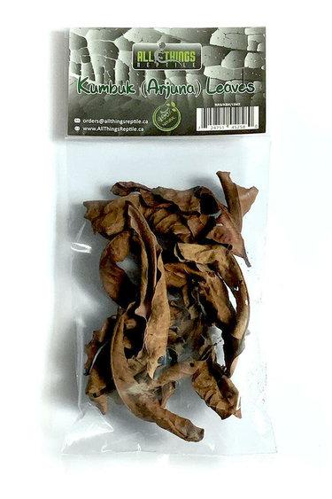 All things reptile Kumuk de différentes tailles pq 15 - Kumbuk Mix Size Leaves 15-pack