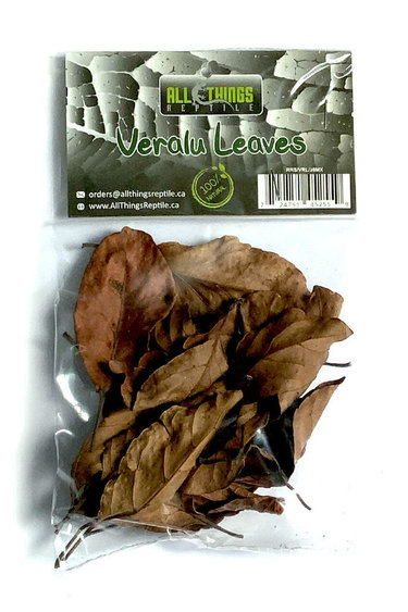 All things reptile Veralu (Ceylan Olive) feuilles de différentes tailles pq 20 - Veralu (Ceylon Olive) Mix Size Leaves 20-pack