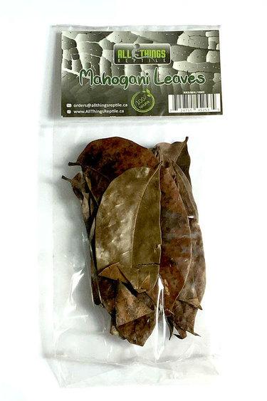 All things reptile Feuilles d'acajou de différentes tailles pq 10 - Mahogani Mix Size Leaves 10-pack