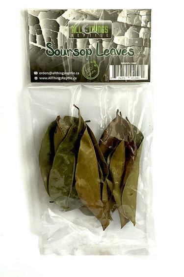 All things reptile Feuilles de corossol de différentes tailles pq 10 - Soursop Mix Size Leaves 10-pack