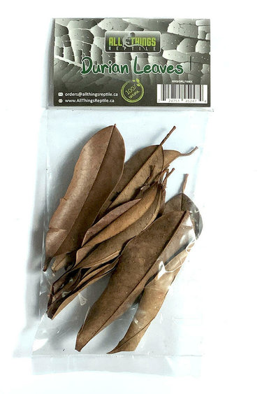 All things reptile Feuilles de Durian de différentes tailles pq 10 - Durian Mix Size Leaves 10-pack