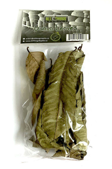 All things reptile Feuilles de goyave de différentes tailles pq 10 - Guava Mix Size Leaves 10-pack