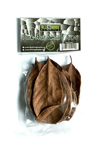 All things reptile Petites feuilles de Jacquier pq 10 - Jack fruit Small Leaves 10-pack