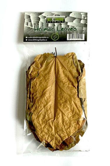 All things reptile Feuilles d'Halmilla de différentes tailles pq 10 - Halmilla Mix Size Leaves 10-pack