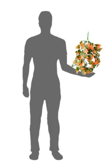 Pangea Plante suspendue orange - Hanging Plants Orange