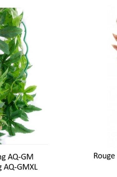 Aqua Globe Plante d'aquarium d'érable - Maple Aquarium Plant