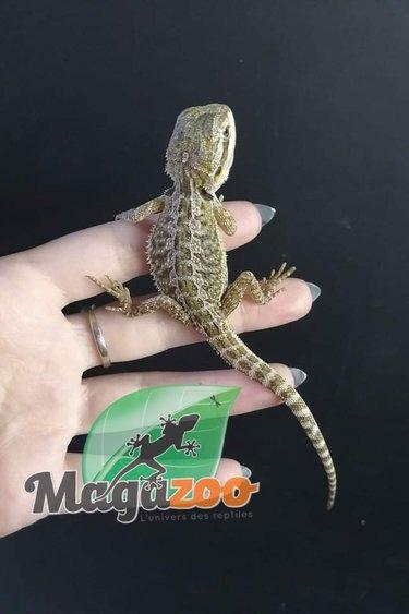 Magazoo Dragon Barbu Bébé 4