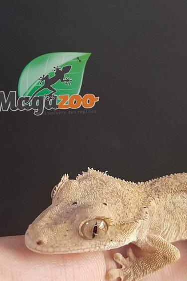 Magazoo Gecko à Crête Bicolor Bébé  dalmatien