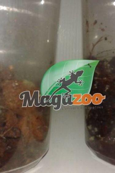 Magazoo Culture