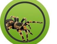 Mygale/Araignée