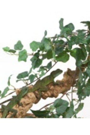 "MagNaturals Grappe de vigne de jungle 24""/Jungle Vine Cluster"