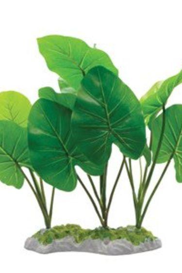 Fluval Plante echinodorus avec base en mousse