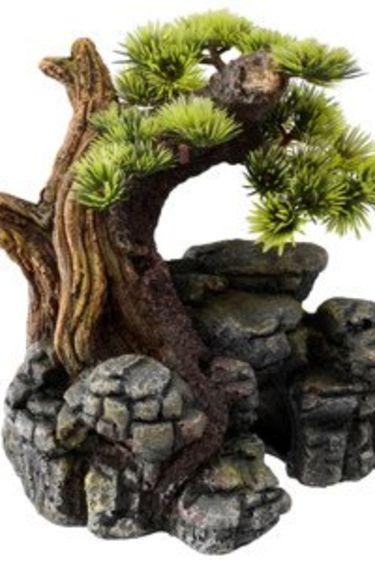 Bonsai sur formation rocheuse