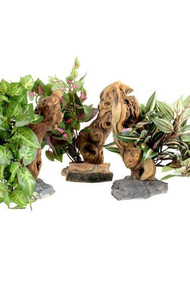 Habi-Scape Plante tropicale avec bois lavé - Tropical plant with driftwood