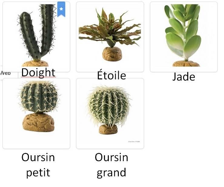 Exoterra Cactus divers