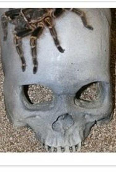 Pet-Tekk Caverne en crâne/skull cave