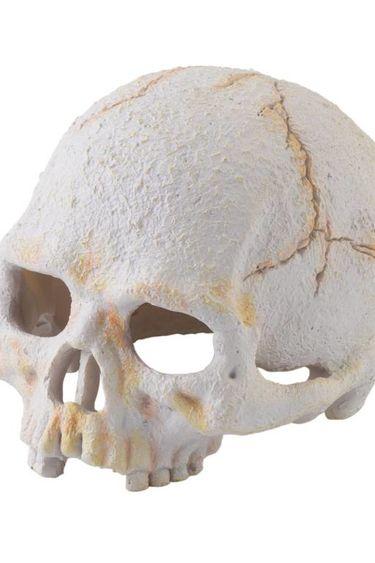 Exoterra Crâne de petit primate