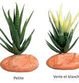 Reptiles treasures Plante Aloe Vera