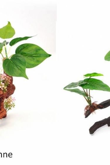 Origins Plante ficus