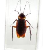 Magazoo Presse-papier cafard - petit (Cockroach)