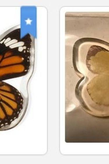 Magazoo Aimant papillon