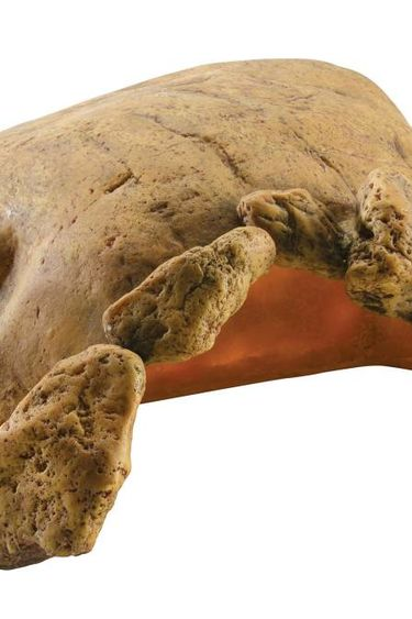 Exoterra Grotte pour tortue terrestre-gros Lezard -serpent