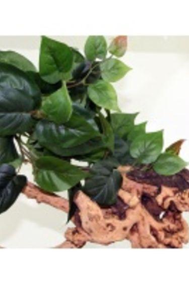 MagNaturals Feuilles de jungle Large/Large Hanging Jungle