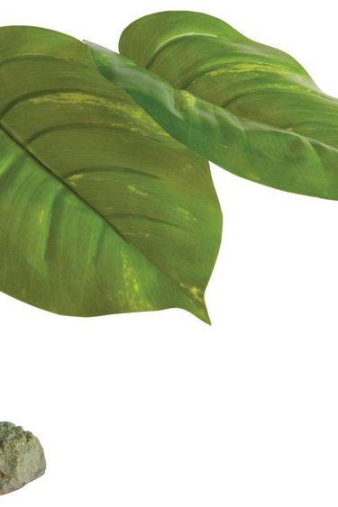 Exoterra Plantes scindapsus