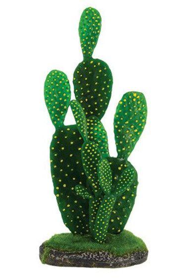 Petit cactus de figue - Prickly pear cactus small