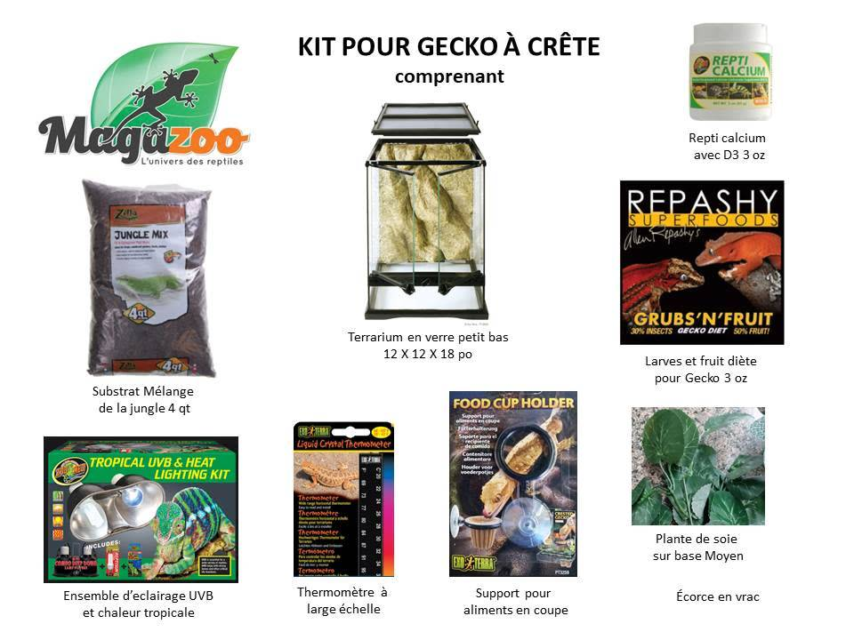 Magazoo Ensemble pour gecko à crête