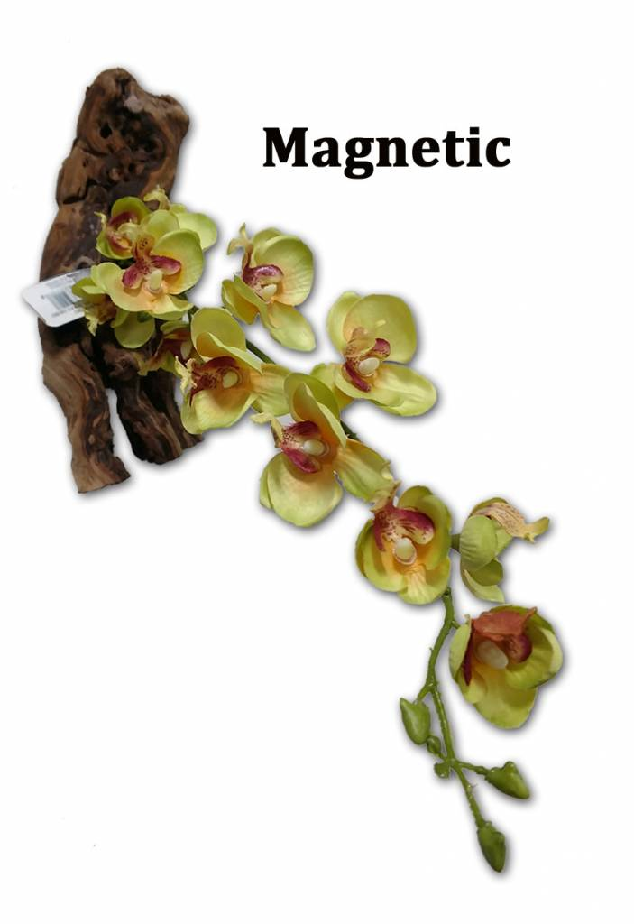 MagNaturals Orchidée pourpre magnétique - Orchid Purple Orchid 16''