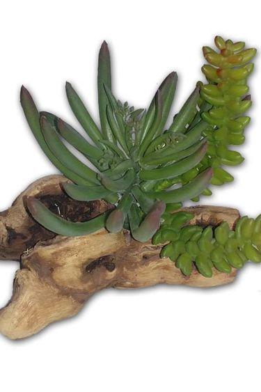MagNaturals Plante verte de 8'' - Succulent on Driftwood